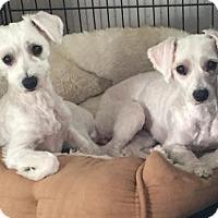 Adopt A Pet :: Bellatrix and Narcissa - Costa Mesa, CA