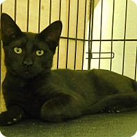 Adopt A Pet :: Jagg - Montgomery City, MO