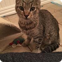 Adopt A Pet :: Dinah - Bulverde, TX