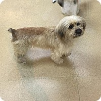 Adopt A Pet :: Elsa - Miami, FL