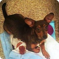 Adopt A Pet :: LINDEN - Auburn, CA