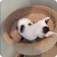 Adopt A Pet :: Mufasa - Ashland, OH