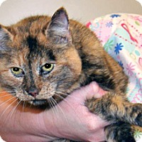 Adopt A Pet :: Cordelia - Wildomar, CA