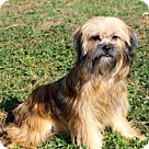 Adopt A Pet :: FANTASTIC FAYE