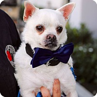 Adopt A Pet :: Stitch - South El Monte, CA