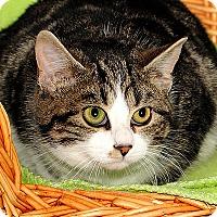 Adopt A Pet :: Luna - Gatineau, QC