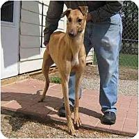 Adopt A Pet :: Jimmy - Oak Ridge, NC