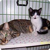 Adopt A Pet :: Molloy - Island Park, NY