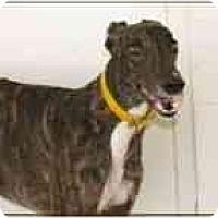 Adopt A Pet :: Donald - St Petersburg, FL