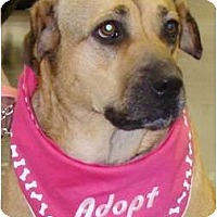 Adopt A Pet :: Mary Jane - Oklahoma City, OK