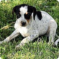 Adopt A Pet :: Garrick - Staunton, VA