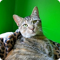Adopt A Pet :: Frekkles - Northbrook, IL