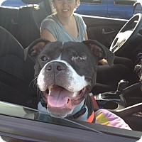 Adopt A Pet :: Bonnie - Villa Park, IL