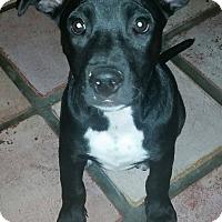Adopt A Pet :: Tippy - Ft. Lauderdale, FL