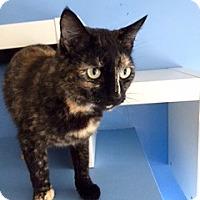 Adopt A Pet :: Rue - Novato, CA