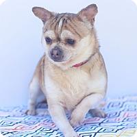 Adopt A Pet :: Cinderella - Loomis, CA