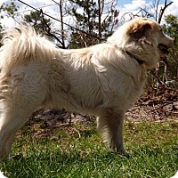 Adopt A Pet :: Thor - Citrus Springs, FL