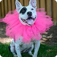Adopt A Pet :: Piglet - Charlotte, MI