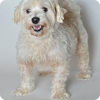 Adopt A Pet :: Sammy - St. Charles, MO
