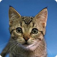 Adopt A Pet :: Milo - Overland Park, KS