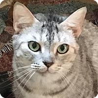 Adopt A Pet :: Silver - Spring Valley, NY
