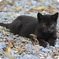 Adopt A Pet :: Portia YOUNG FEMALE - Morehead, KY