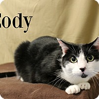 Domestic Shorthair Cat for adoption in Melbourne, Kentucky - Cody