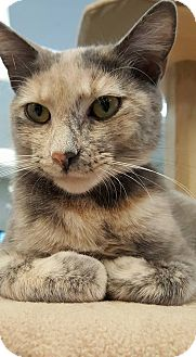 Domestic Shorthair Cat for adoption in Grayslake, Illinois - Elena