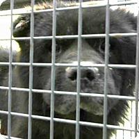 Adopt A Pet :: URGENT on 10/16 @DEVORE - San Bernardino, CA