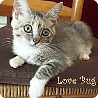 Adopt A Pet :: Lovebug $35 adoption - Monterey, VA