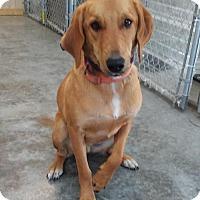 Adopt A Pet :: Roady - Nanuet, NY