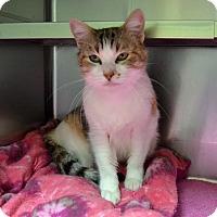 Adopt A Pet :: Miranda - Wheaton, IL