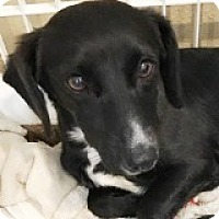 Adopt A Pet :: Reese Rajma - Houston, TX