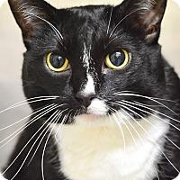 Adopt A Pet :: Peppermint - Dublin, CA