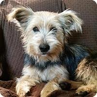 Adopt A Pet :: Yoshi - Brownsboro, AL