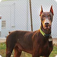 Adopt A Pet :: Marshall - Shreveport, LA