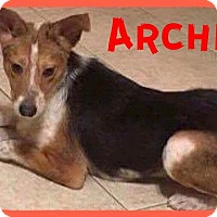 Adopt A Pet :: Archie - Fort Wayne, IN