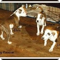 Adopt A Pet :: Elvis - Cincinnati, OH