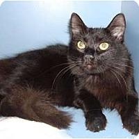 Adopt A Pet :: Patricia - Lake Charles, LA