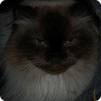 Adopt A Pet :: Petal (aka Petunia) - Ennis, TX