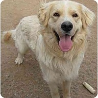 Adopt A Pet :: Charlie - Golden Valley, AZ