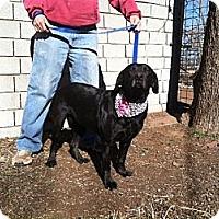 Adopt A Pet :: Maise - Childress, TX