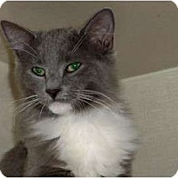 Adopt A Pet :: Barry Meow-nilow - Secaucus, NJ