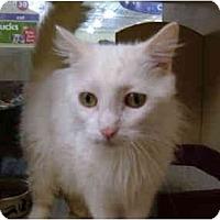 Adopt A Pet :: Shaba - No.Charleston, SC