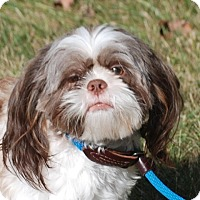 Adopt A Pet :: Sammy - Providence, RI