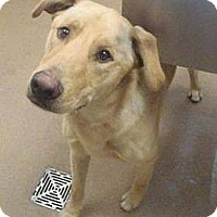 Adopt A Pet :: Jake - Las Vegas, NV