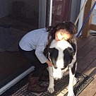 Adopt A Pet :: Hunter (Bonded with Logan)