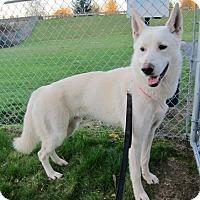 Adopt A Pet :: Baxter - Gig Harbor, WA