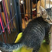 Adopt A Pet :: Kineta - Edmonton, AB