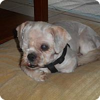 Adopt A Pet :: DYLAN (LM) - Tampa, FL